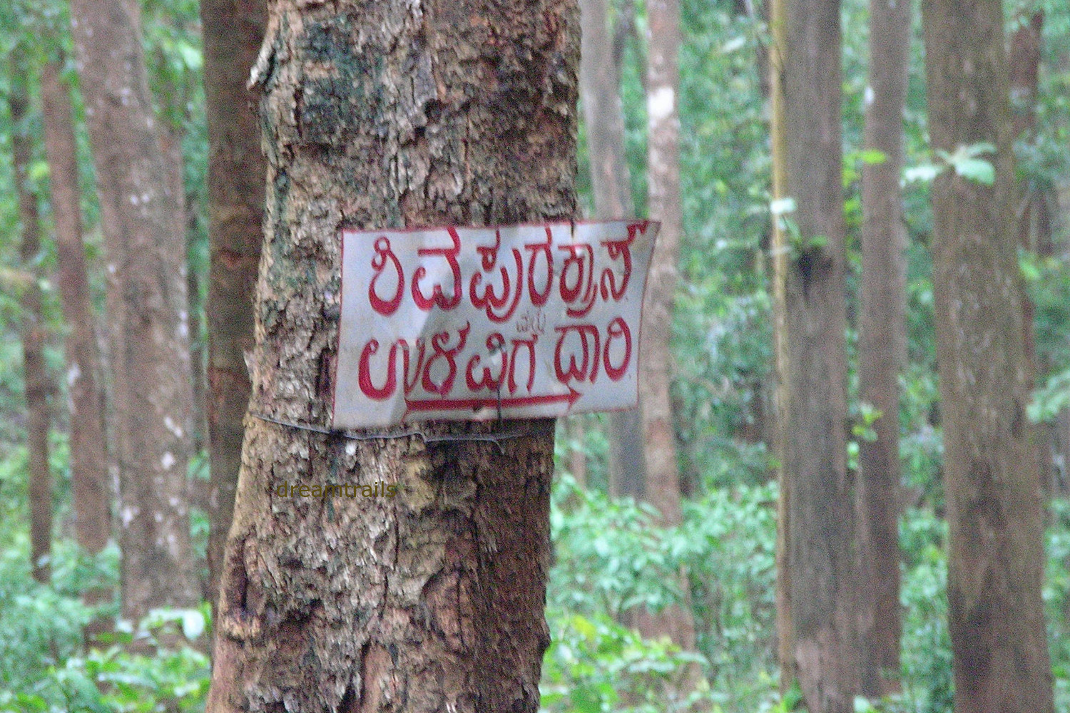 Shivapura to Ulavi Road
